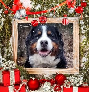 Celesta_Christmas